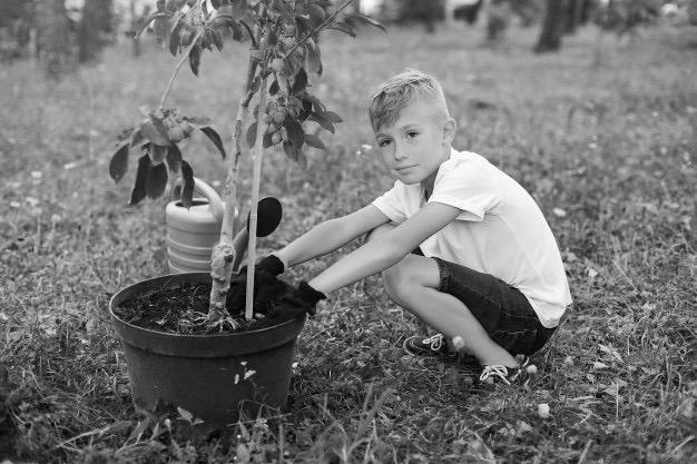 boy-planting-tree