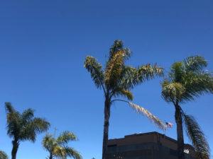 California_PalmTrees